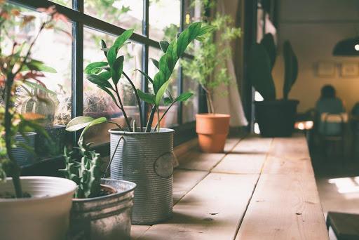 Arrivae indoor plants